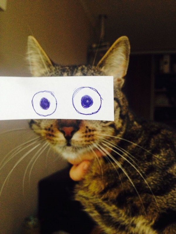 23 Photos Of Cats With Funny Anime Eyes