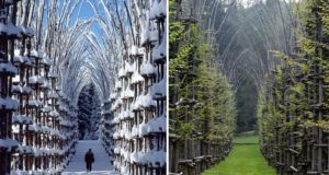 Cathedral made from trees