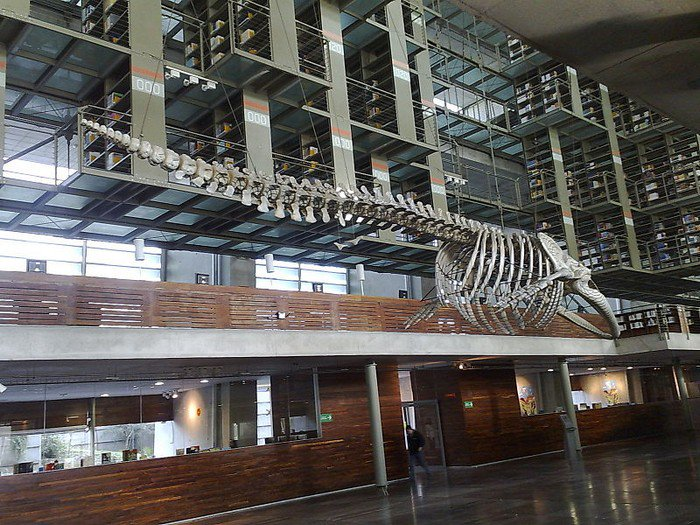Vasconcelos Library inside
