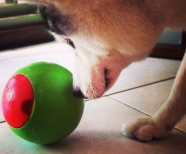 Timed Puzzle Feeder For Dogs