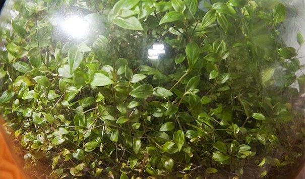 bottle-garden-leaves