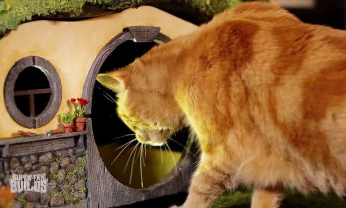 cat entering litter box