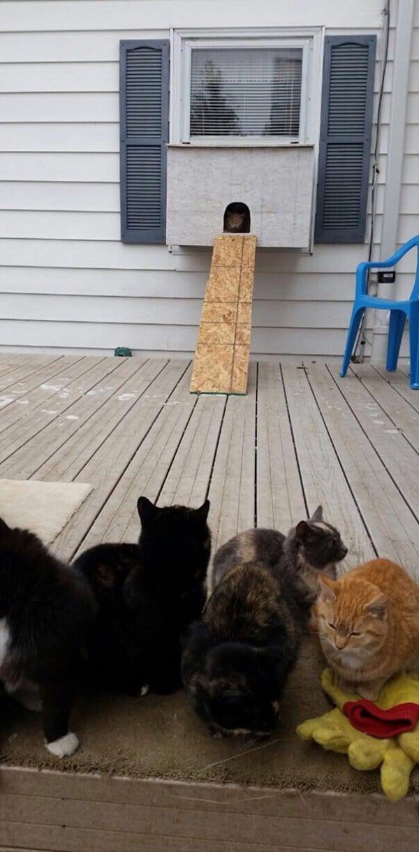 cataquarium-stray-cat-shelter-entrance