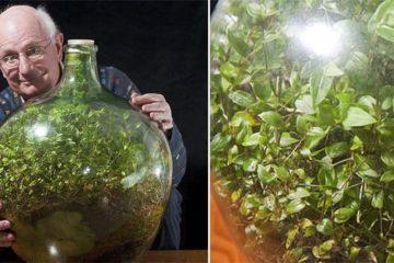 ecosystem in bottle