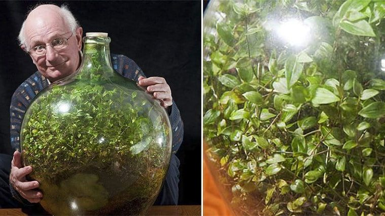 ecosystem in bottle