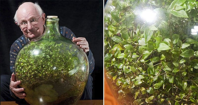 Sealed Bottle Garden Still Alive Despite Having Been Opened Just Once In 54 Years
