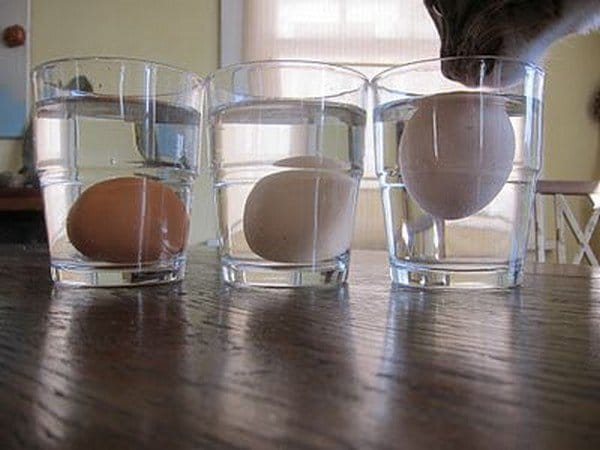 eggs in water