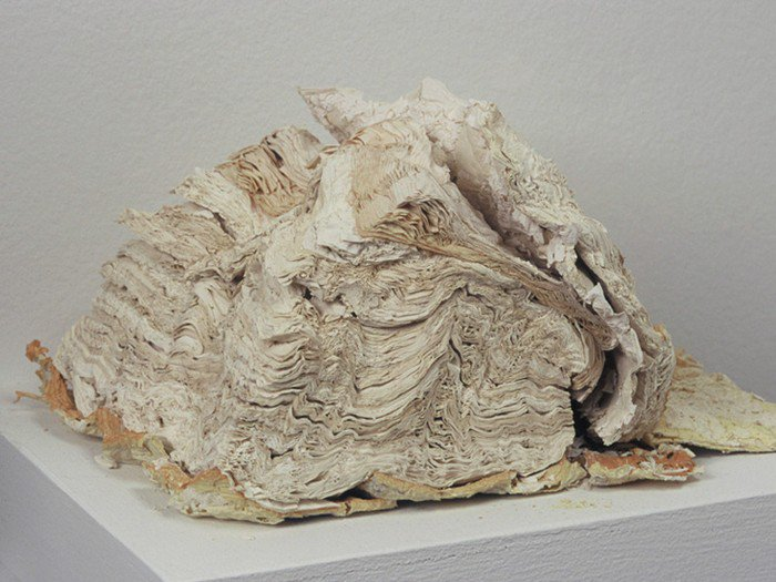 fossilized book