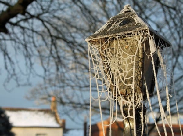 frozen-cobweb