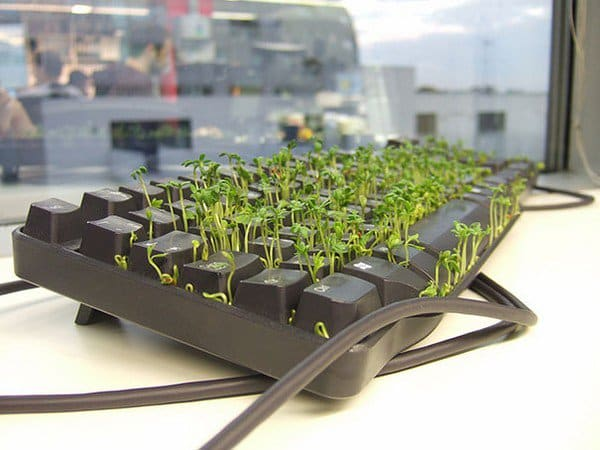 grass garden in coworkers keyboard close up