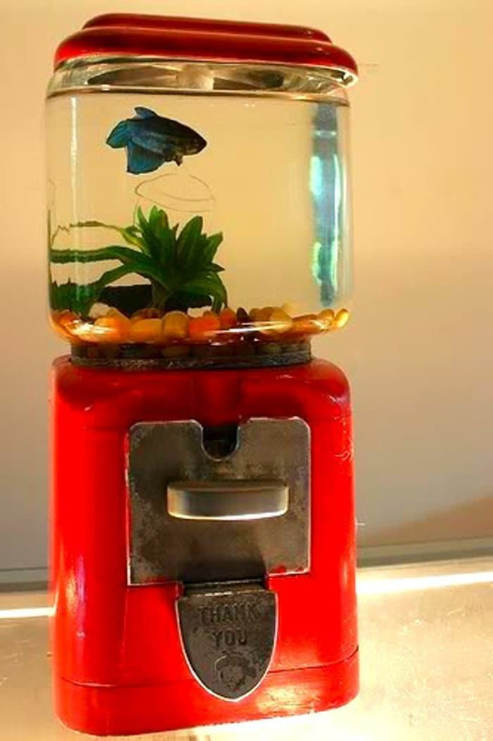 16 awesome upcycling ideas for your home for Gumball fish tank