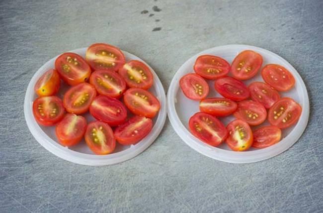 hack-tomatoes
