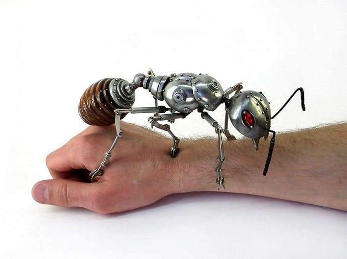 igor verniy ant