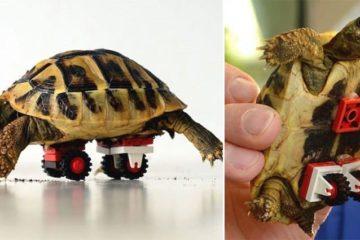 lego helps tortoise