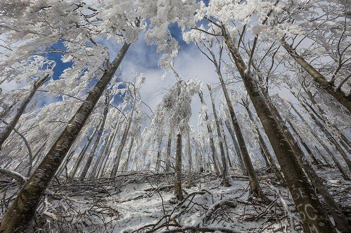 mount-javornik-slovenia-winter-trees