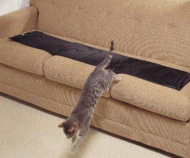 paw activated mat cat