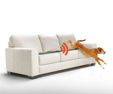 paw activated mat sofa