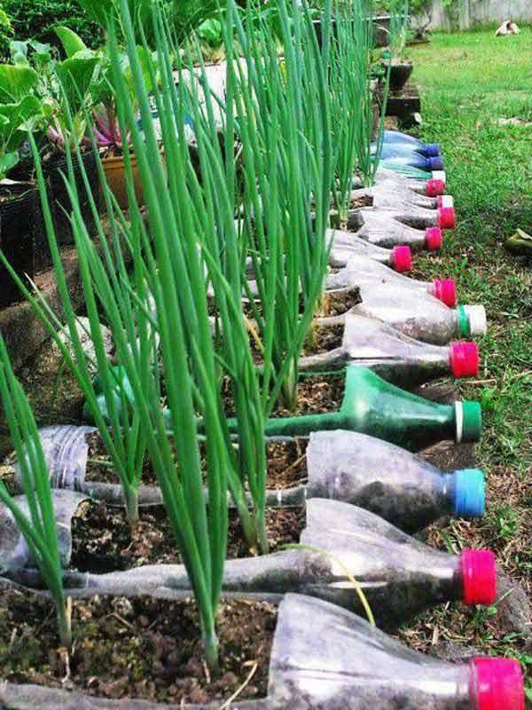 plastic-bottle-planters