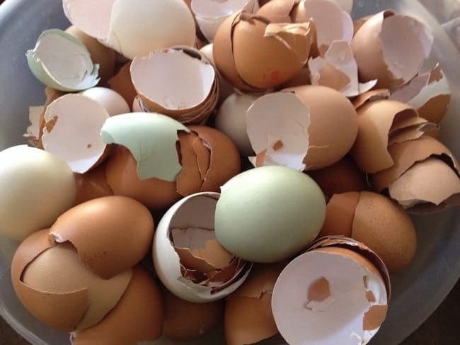 recycle-egg-shells