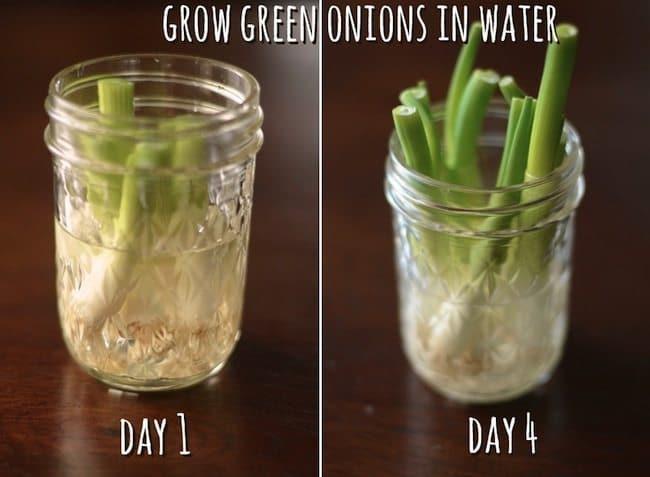 recycle-greenonions
