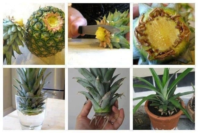 recycle-pineapple