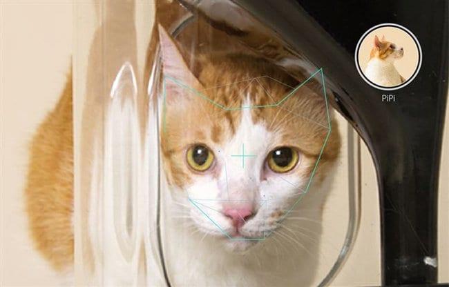 smart-cat-feeder
