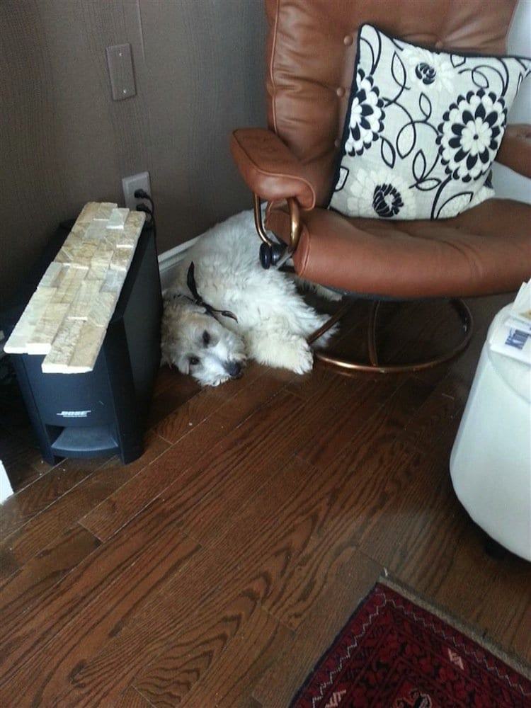 stairs-dog-dog