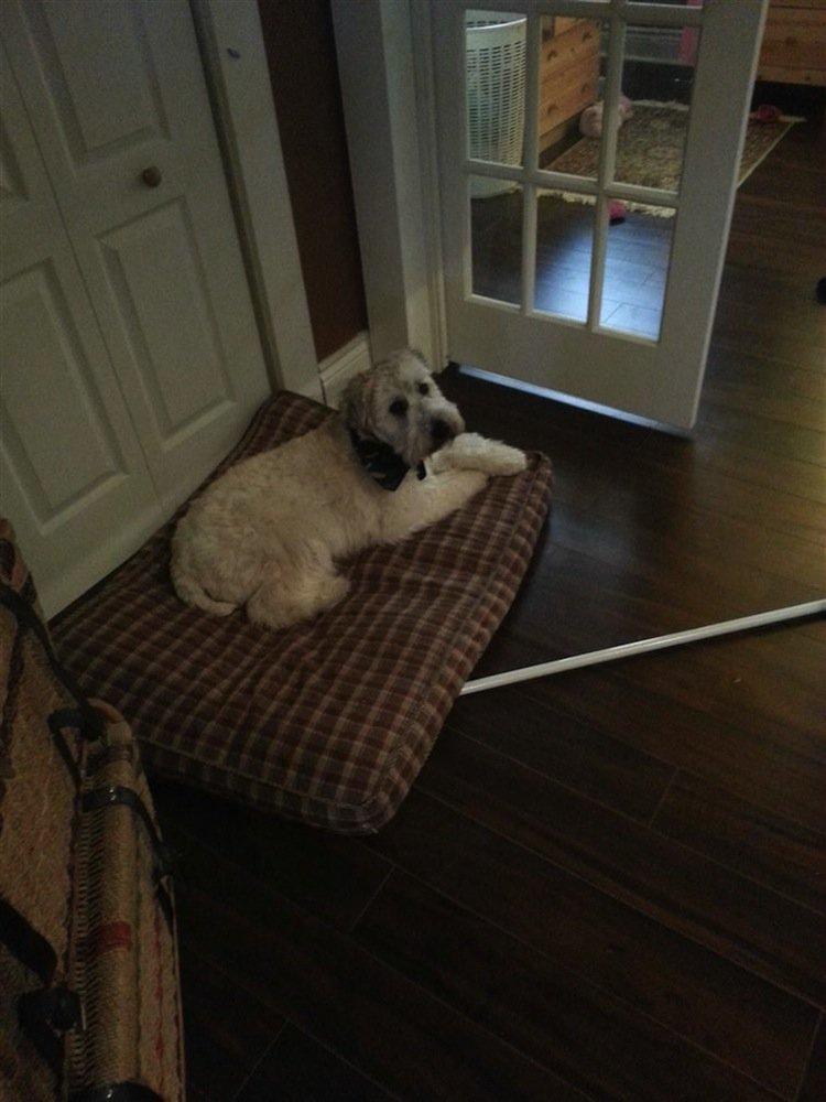 stairs-dog-waiting