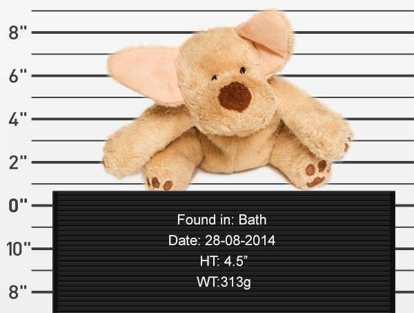 teddy-rescue-dog