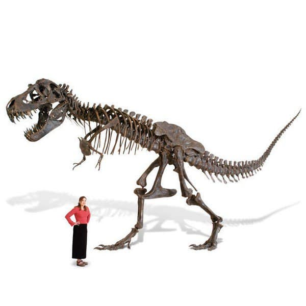 to scale t rex