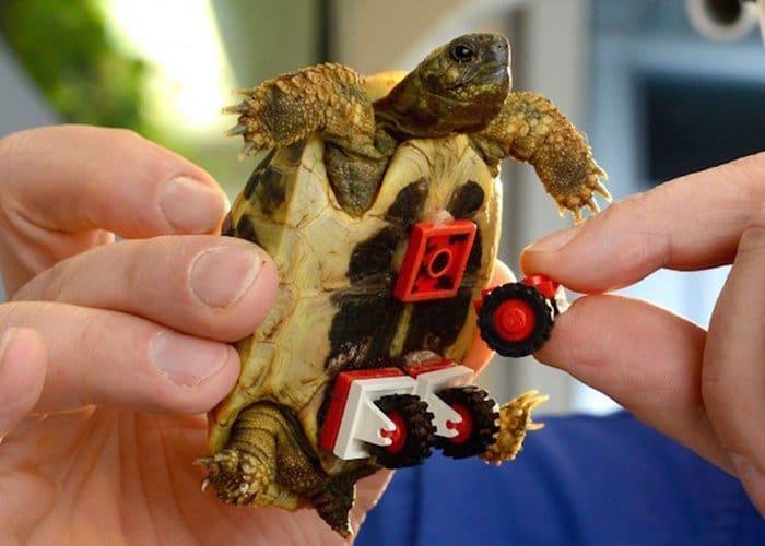 tortoise-lego-wheels-gluing