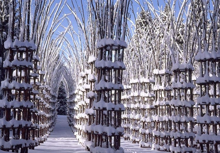 tree-cathedral-in-snow