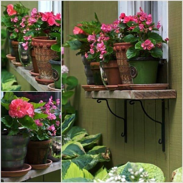 windows-pinkflowers