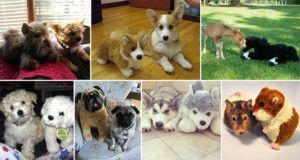 Cute toy Animals