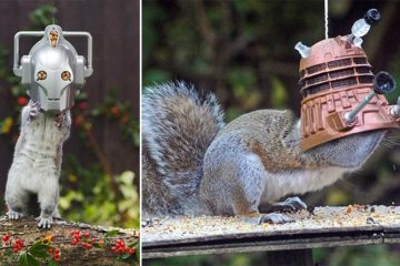 Dr. Who Squirrel Feeders