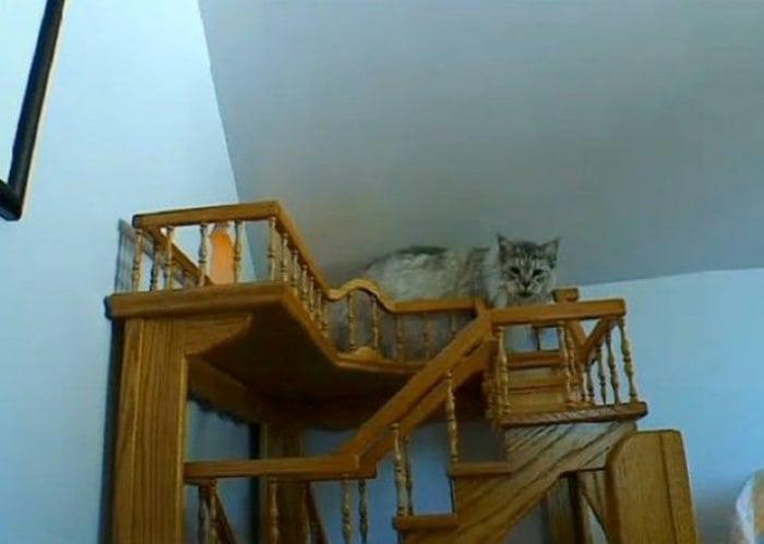 Greg-Krueger-cat-house-stairs