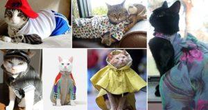 Stylish Cats
