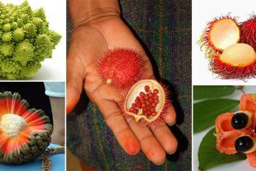 Weird Fruits and Vegetables