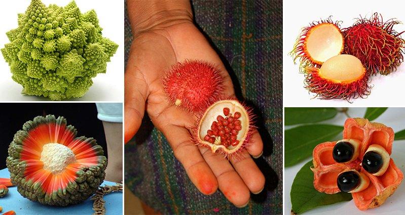 Weird Fruits And Vegetables 11