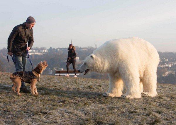 bear dog barking