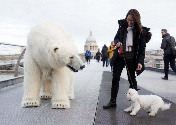 bear dog woman