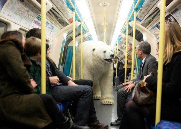 bear passengers train