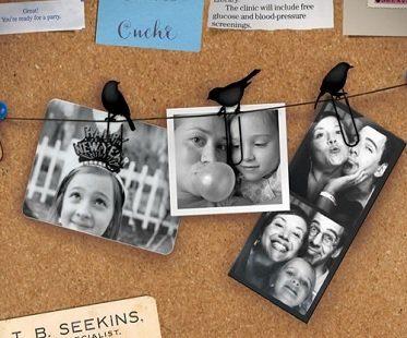 bird clip picture hangers