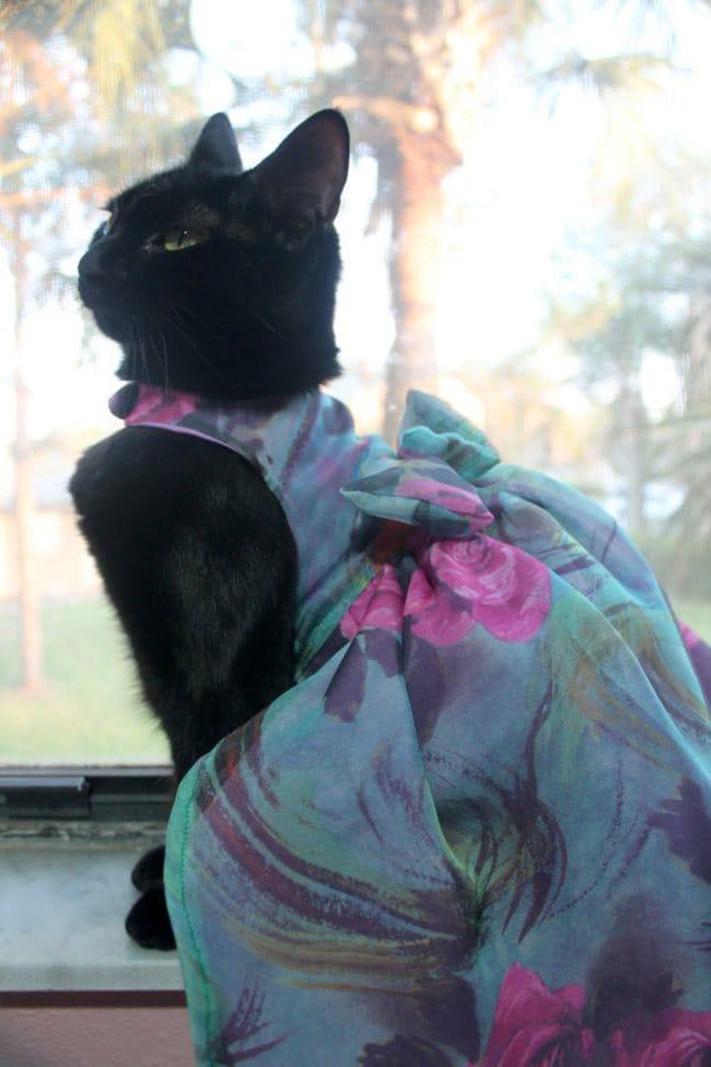 black cat dress