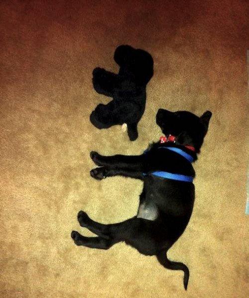 black dog sleeping side stuffed dog