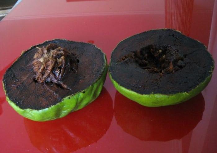 black-sapote