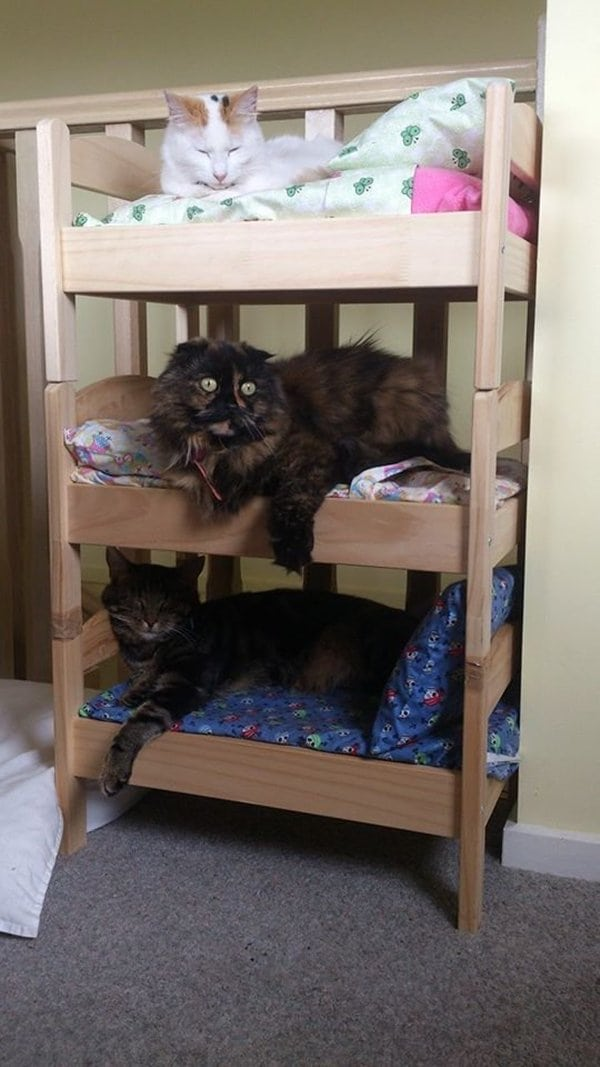 cat-bunk-bed-after