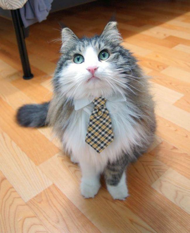 cat collar tie