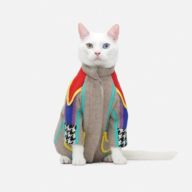 cat colorful clothing
