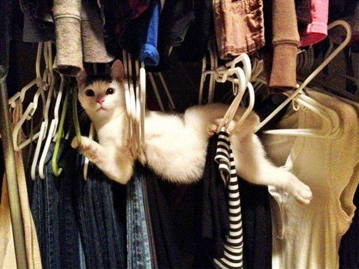 cat hangers